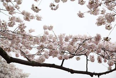 Cherry Blossoms - Washington Dc - 0113103 Art Print by DC Photographer