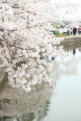 Cherry Blossoms - Washington Dc - 0113104 Art Print by DC Photographer