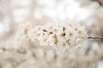 Cityscape Photograph - Cherry Blossoms - Washington Dc - 0113109 by DC Photographer