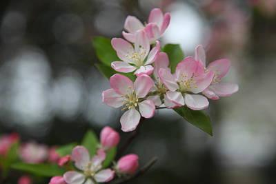 Cherry Blossoms - Washington Dc - 0113110 Art Print by DC Photographer
