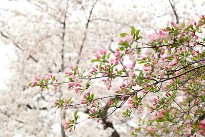 Tidal Photograph - Cherry Blossoms - Washington Dc - 0113112 by DC Photographer