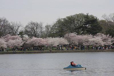 Cherry Blossoms - Washington Dc - 011314 Art Print by DC Photographer