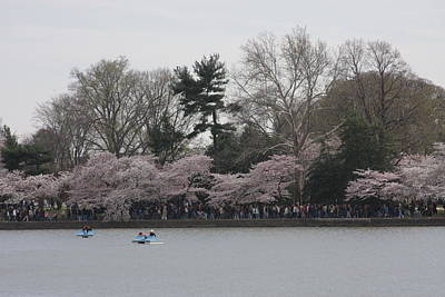Cherry Blossoms - Washington Dc - 011317 Art Print