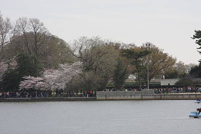 Cherry Blossoms - Washington Dc - 011318 Art Print by DC Photographer