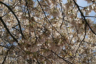 Tidal Photograph - Cherry Blossoms - Washington Dc - 011336 by DC Photographer