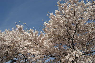 Cherry Blossoms - Washington Dc - 011337 Art Print by DC Photographer