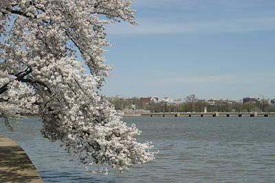 Tidal Photograph - Cherry Blossoms - Washington Dc - 011342 by DC Photographer