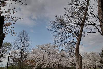 Tidal Photograph - Cherry Blossoms - Washington Dc - 011356 by DC Photographer