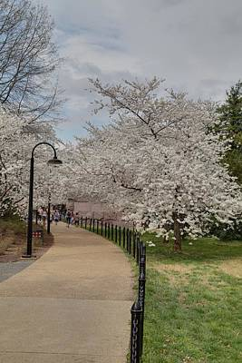 Cherry Blossoms - Washington Dc - 011357 Art Print