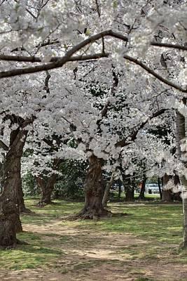 Cherry Blossoms - Washington Dc - 011382 Art Print by DC Photographer