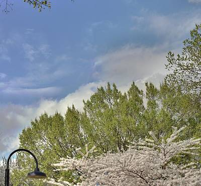 Cherry Blossoms - Washington Dc - 011385 Print by DC Photographer