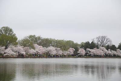 Destination Photograph - Cherry Blossoms - Washington Dc - 011395 by DC Photographer