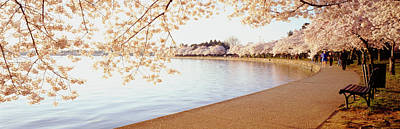 Cherry Blossoms, Washington Dc Print by Panoramic Images