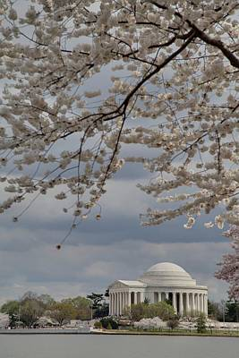 Cherry Blossoms With Jefferson Memorial - Washington Dc - 011313 Art Print