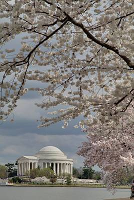Springtime Photograph - Cherry Blossoms With Jefferson Memorial - Washington Dc - 011316 by DC Photographer
