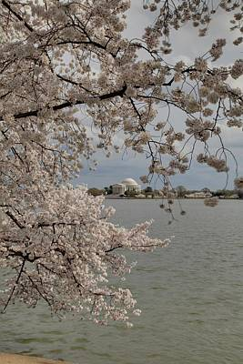 Tidal Photograph - Cherry Blossoms With Jefferson Memorial - Washington Dc - 011320 by DC Photographer