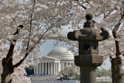 White Photograph - Cherry Blossoms With Jefferson Memorial - Washington Dc - 011326 by DC Photographer