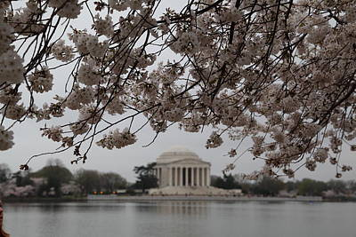 President Photograph - Cherry Blossoms With Jefferson Memorial - Washington Dc - 011347 by DC Photographer