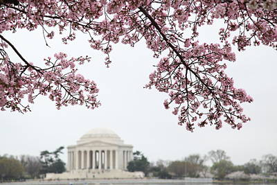 Cherry Blossoms With Jefferson Memorial - Washington Dc - 011351 Art Print