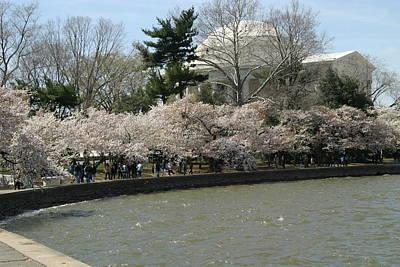 Cherry Blossoms With Jefferson Memorial - Washington Dc - 01139 Art Print by DC Photographer
