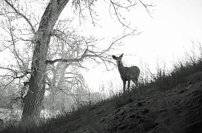 Photograph - Cherry Creek Wilderness by Robert Meyers-Lussier