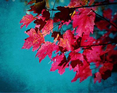 Rustic Photograph - Cherry Red Maple Leaves On Teal Blue Sky by Brooke T Ryan