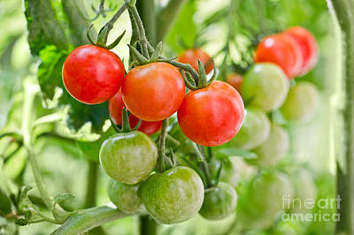 Tomato Photograph - Cherry Tomatoes by Delphimages Photo Creations