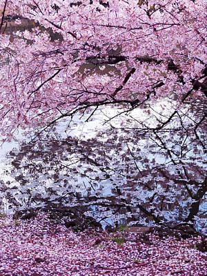 Cherry Tree Branches With Pink Blossom Touching Water Art Print by Oleksiy Maksymenko