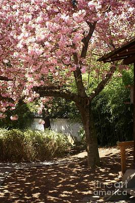 Cherry Blossoms Road Photograph - Cherry Tree In Bloom by Dawn Gari