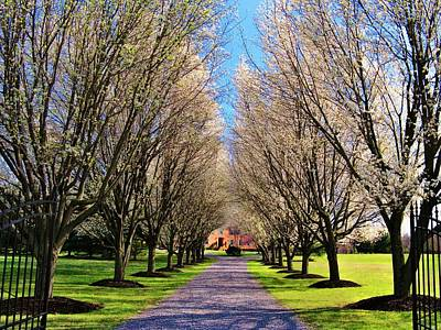 Upperville Photograph - Cherry Tree Lane by Joyce Kimble Smith