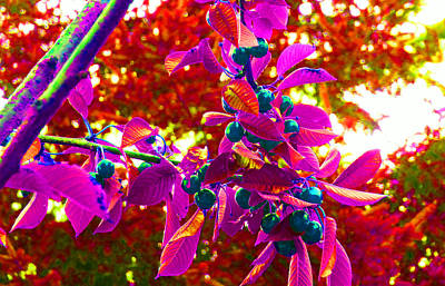 Photograph - Cherry Tree Pop 2 by Laurie Tsemak