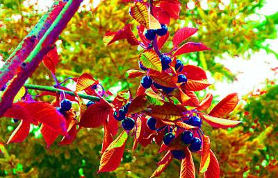 Photograph - Cherry Tree Pop 3 by Laurie Tsemak
