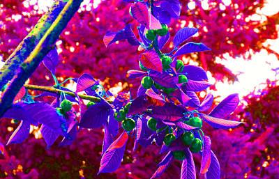 Photograph - Cherry Tree Pop by Laurie Tsemak