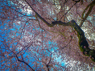 Photograph - Cherry Tree by Roger Mullenhour