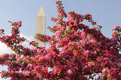 Print featuring the photograph Cherry Trees And Washington Monument 5 by Mitchell R Grosky