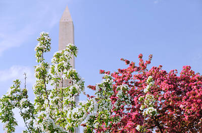 Cherry Trees And Washington Monument Four Art Print