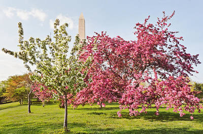 Cherry Trees And Washington Monument Three Art Print
