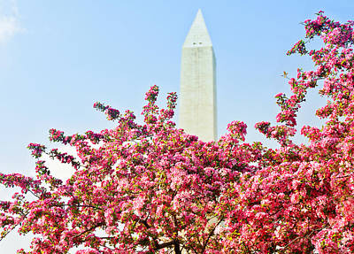 Cherry Trees And Washington Monument Two Art Print by Mitchell R Grosky