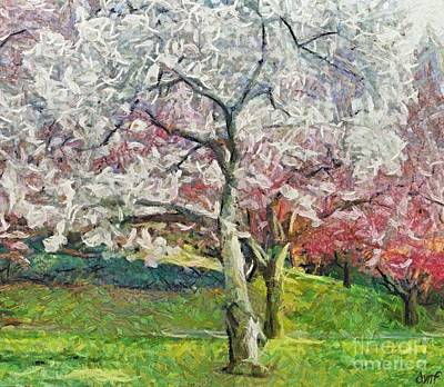 Cherry Trees Print by Dragica  Micki Fortuna