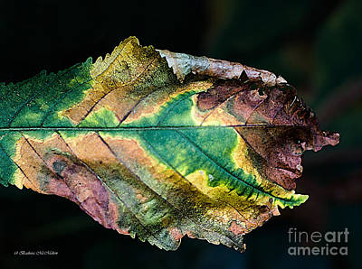 Photograph - Chestnut Autumn Mosaic by Barbara McMahon