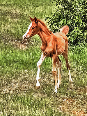 Photograph - Chestnut Foal by CarolLMiller Photography