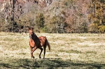 Photograph - Chestnut Mare by CarolLMiller Photography