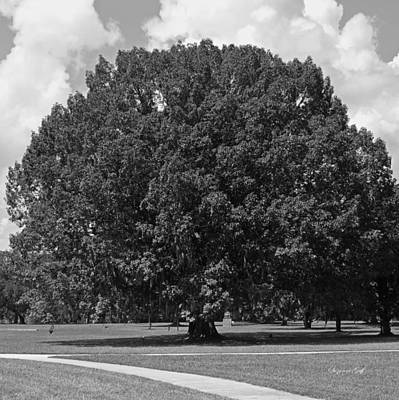 Tree Photograph - Chestnut Oak - Black And White by Suzanne Gaff