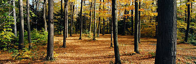 Fallen Leaf Photograph - Chestnut Ridge Park Orchard Park Ny Usa by Panoramic Images