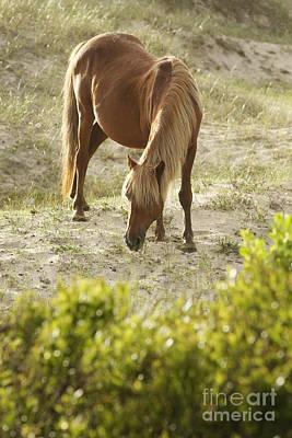 Glass Eyed Pony Photograph - Chestnut Stallion by Lyndsey Warren
