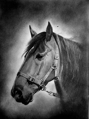 Drawing - Cheyenne by Derrick Parsons