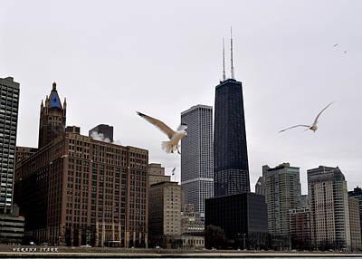 Chicago Birds 2 Art Print