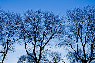Mba Photograph - Chicago - Trees In Blue Hues by MBA Photography