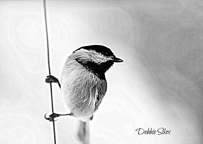 Photograph - Chick Chick by Debbie Sikes