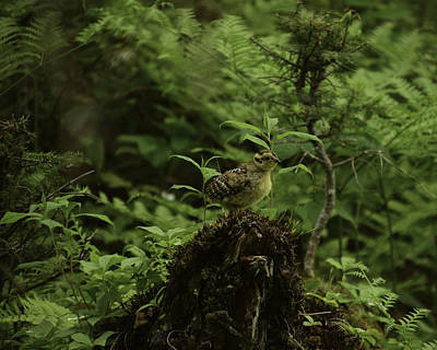 Science Collection - Chick Lookout by Will Burlingham